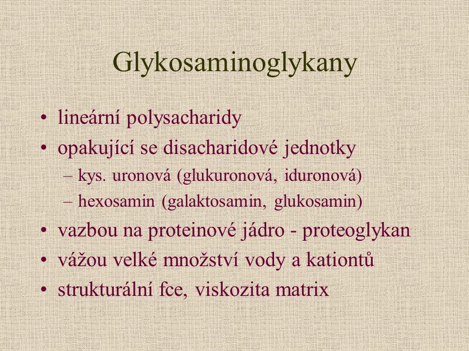 Glykosaminoglykany lineární polysacharidy opakující se disacharidové jednotky –kys. uronová (glukuronová, iduronová) –hexosamin (galaktosamin, glukosa
