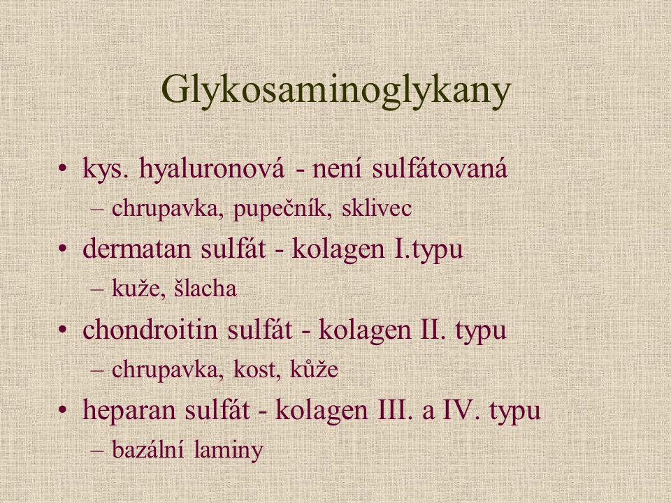 Glykosaminoglykany kys. hyaluronová - není sulfátovaná –chrupavka, pupečník, sklivec dermatan sulfát - kolagen I.typu –kuže, šlacha chondroitin sulfát