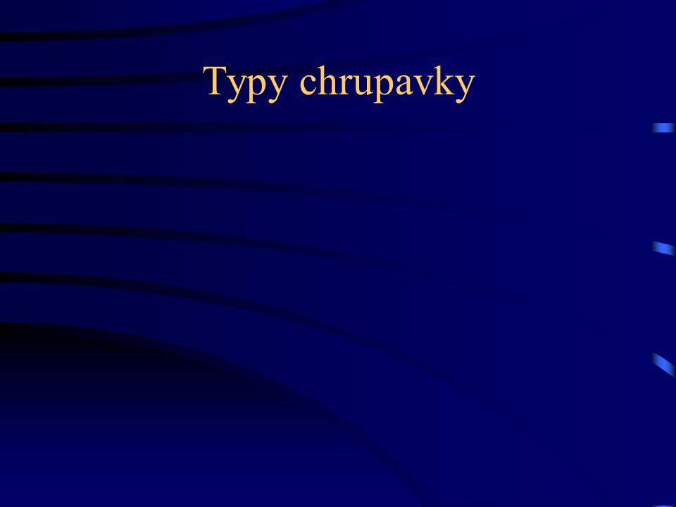 Typy chrupavky