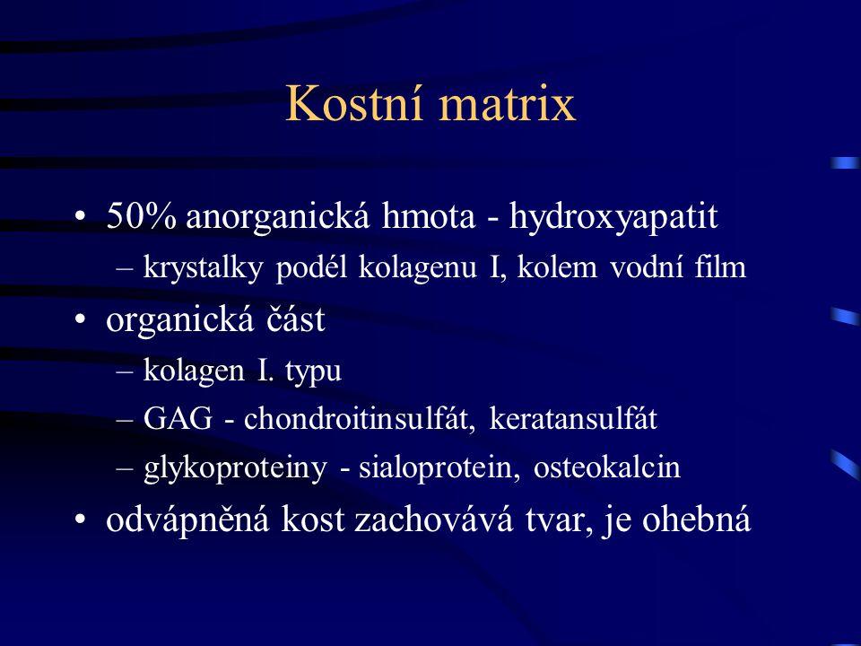 Kostní matrix 50% anorganická hmota - hydroxyapatit –krystalky podél kolagenu I, kolem vodní film organická část –kolagen I. typu –GAG - chondroitinsu