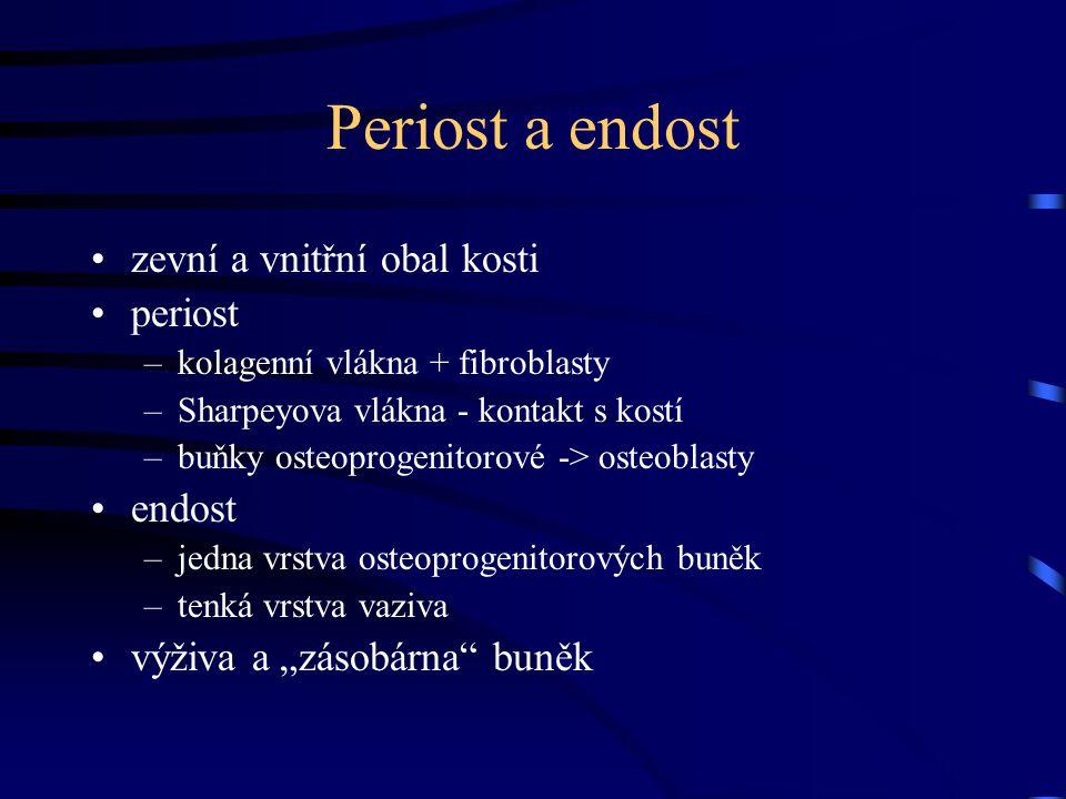 Periost a endost zevní a vnitřní obal kosti periost –kolagenní vlákna + fibroblasty –Sharpeyova vlákna - kontakt s kostí –buňky osteoprogenitorové ->
