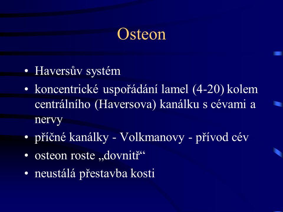Osteon Haversův systém koncentrické uspořádání lamel (4-20) kolem centrálního (Haversova) kanálku s cévami a nervy příčné kanálky - Volkmanovy - přívo