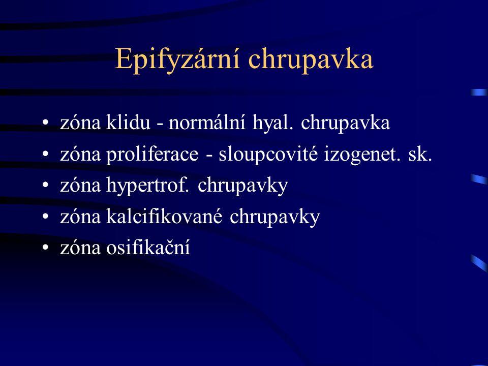 Epifyzární chrupavka zóna klidu - normální hyal. chrupavka zóna proliferace - sloupcovité izogenet. sk. zóna hypertrof. chrupavky zóna kalcifikované c