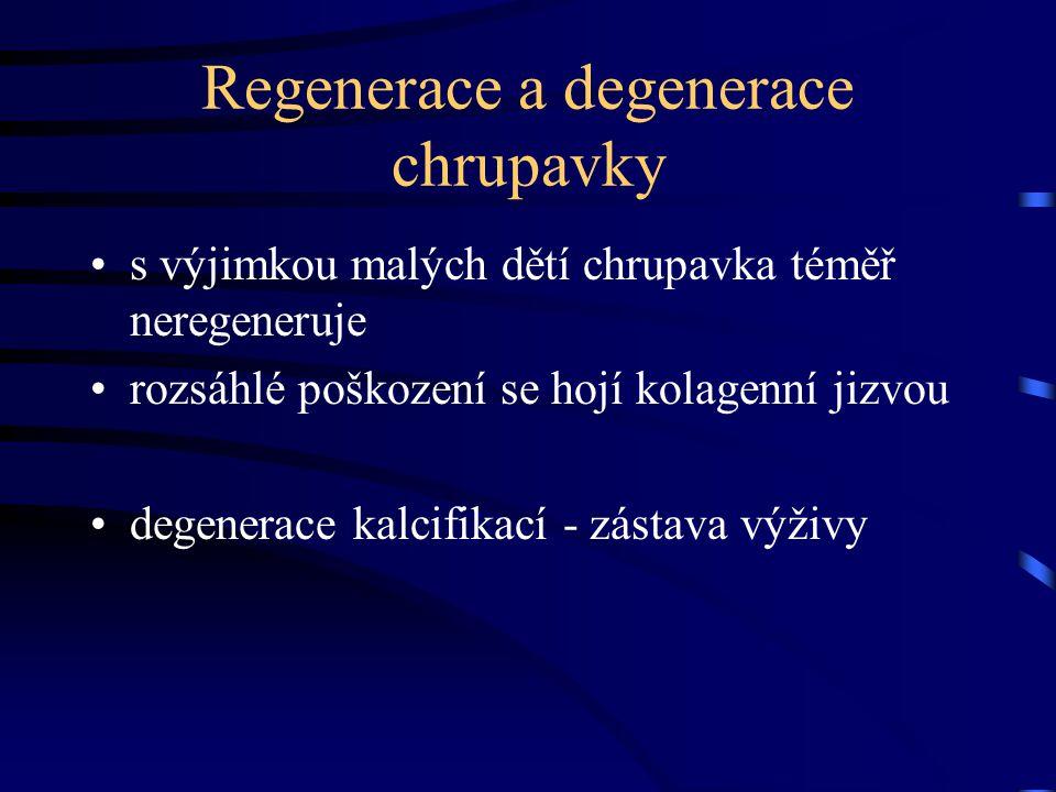 Regenerace a degenerace chrupavky s výjimkou malých dětí chrupavka téměř neregeneruje rozsáhlé poškození se hojí kolagenní jizvou degenerace kalcifika