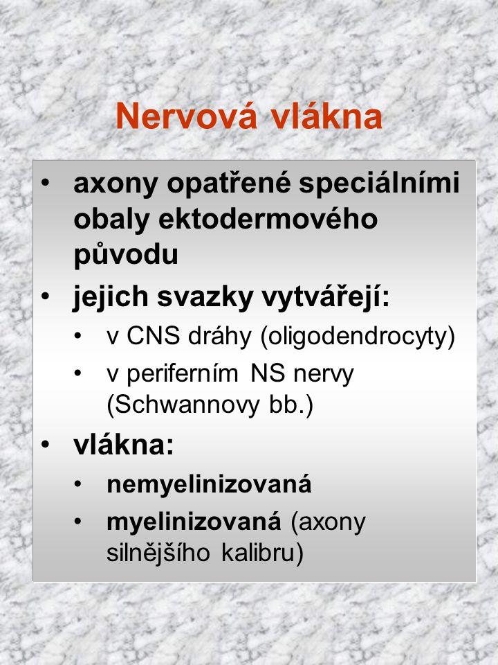Nervová vlákna axony opatřené speciálními obaly ektodermového původu jejich svazky vytvářejí: v CNS dráhy (oligodendrocyty) v periferním NS nervy (Sch