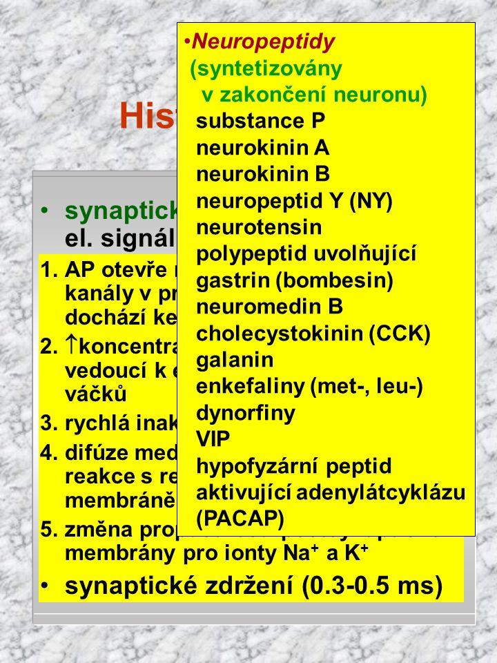 Histofyziologie klidový membránový potenciál - 70 mV (Goldmanova rovnice) udržován iontovými pumpami Na + /K + ATPáza (Na + ven) 10126A-A- 1204Cl - 31