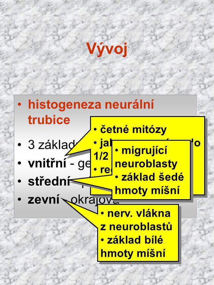 histogeneza neurální trubice 3 základní vrstvy: vnitřní - germinální zóna střední - plášťová zevní - okrajová četné mitózy jako germ. zóna do 1/2 pren