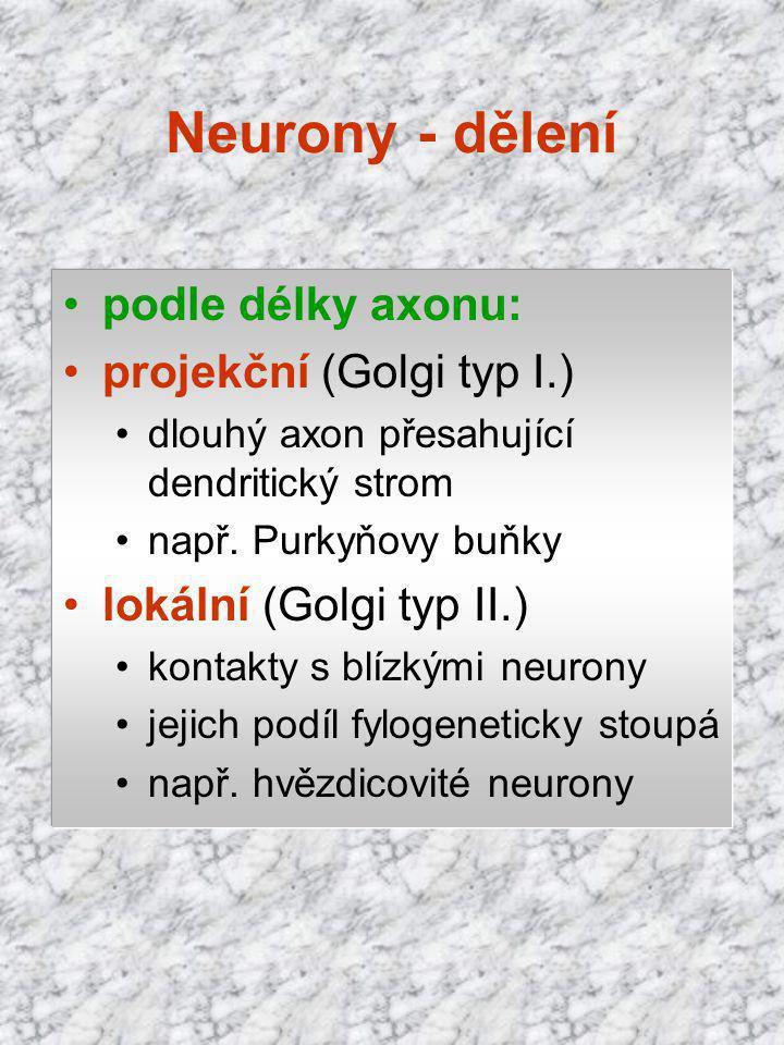 podle délky axonu: projekční (Golgi typ I.) dlouhý axon přesahující dendritický strom např. Purkyňovy buňky lokální (Golgi typ II.) kontakty s blízkým