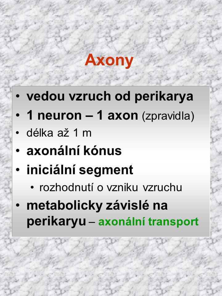 Axony vedou vzruch od perikarya 1 neuron – 1 axon (zpravidla) délka až 1 m axonální kónus iniciální segment rozhodnutí o vzniku vzruchu metabolicky zá