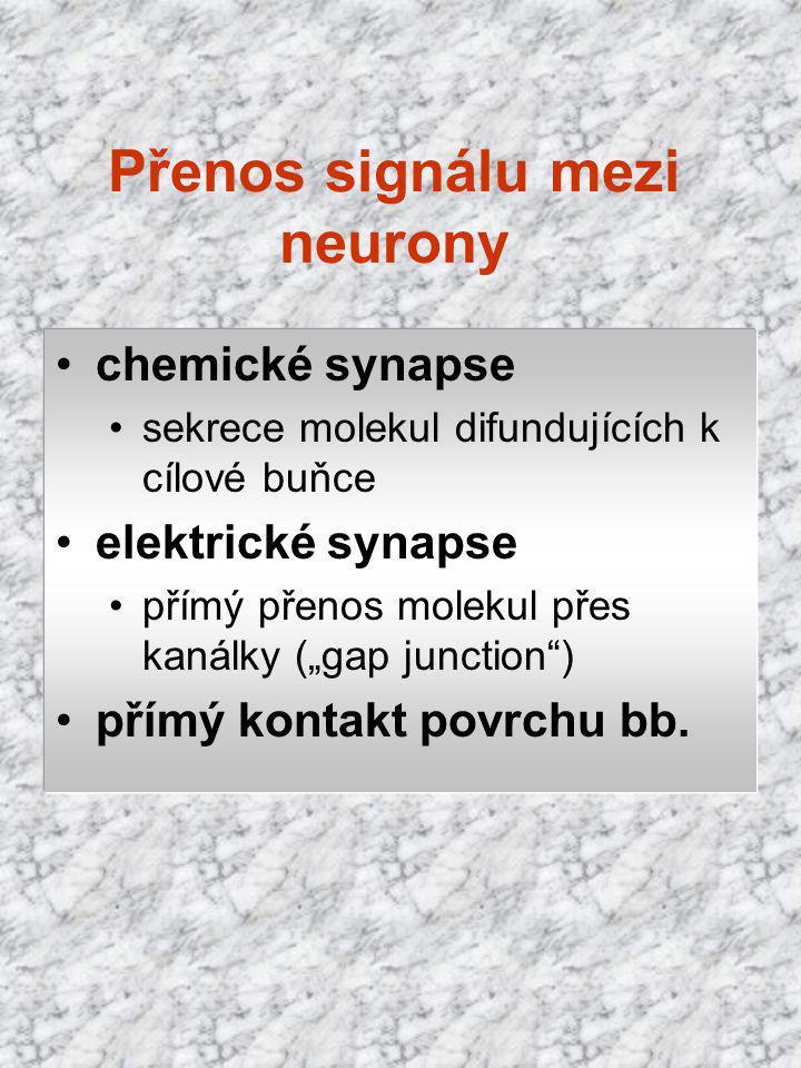 """Přenos signálu mezi neurony chemické synapse sekrece molekul difundujících k cílové buňce elektrické synapse přímý přenos molekul přes kanálky (""""gap j"""