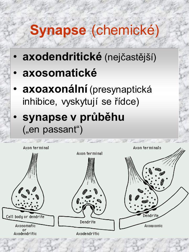 """Synapse (chemické) axodendritické (nejčastější) axosomatické axoaxonální (presynaptická inhibice, vyskytují se řídce) synapse v průběhu (""""en passant"""")"""
