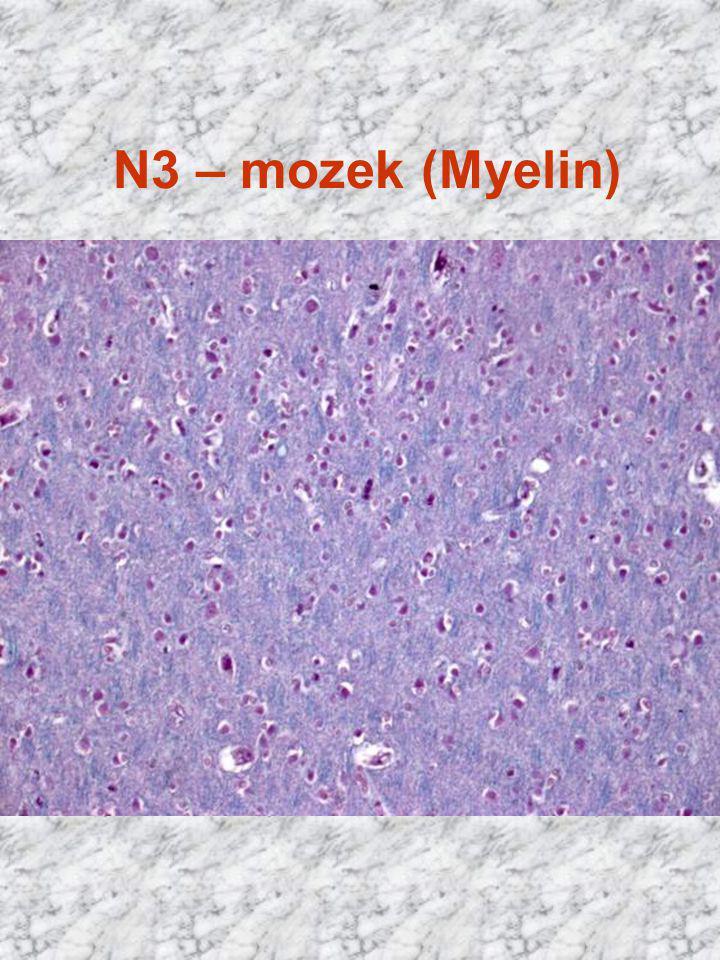N3 – mozek (Myelin)