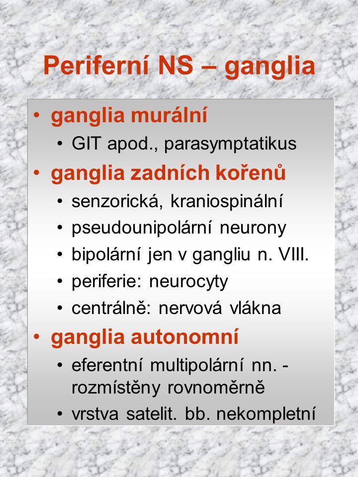 ganglia murální GIT apod., parasymptatikus ganglia zadních kořenů senzorická, kraniospinální pseudounipolární neurony bipolární jen v gangliu n. VIII.