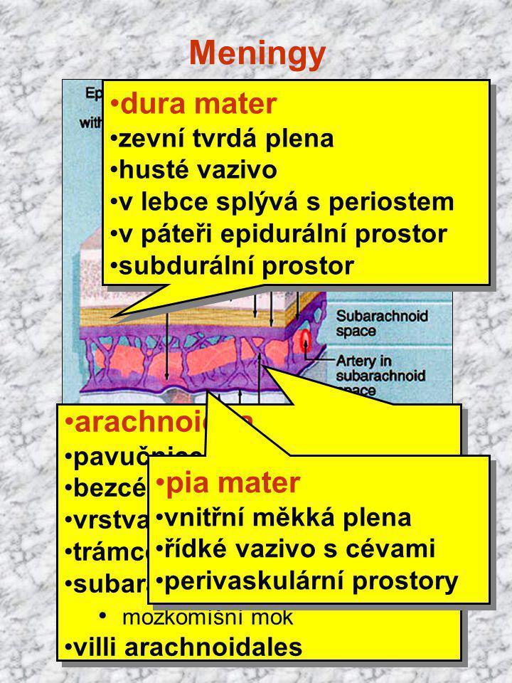 Meningy arachnoidea pavučnice bezcévné vazivo vrstva přilehlá k dura mater trámce spojené s pia mater subarachnoidální prostor mozkomíšní mok villi ar