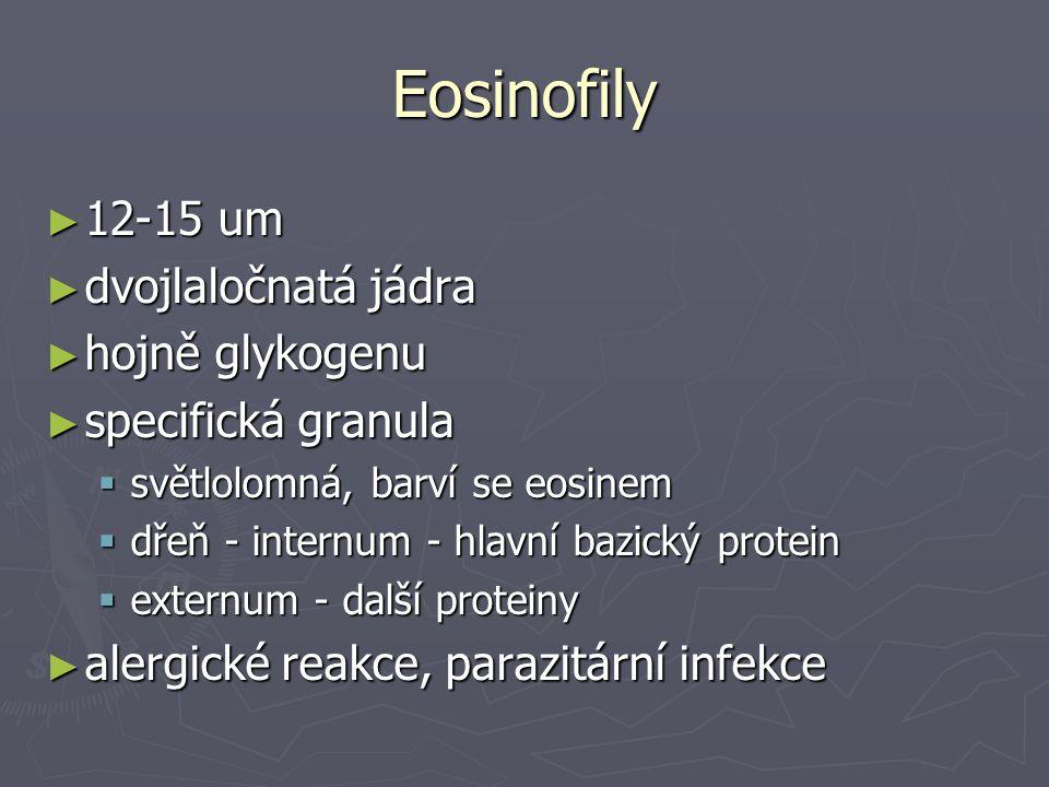 Eosinofily ► 12-15 um ► dvojlaločnatá jádra ► hojně glykogenu ► specifická granula  světlolomná, barví se eosinem  dřeň - internum - hlavní bazický