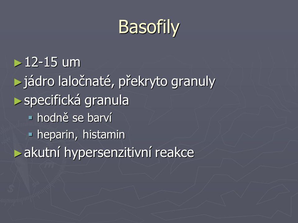 Basofily ► 12-15 um ► jádro laločnaté, překryto granuly ► specifická granula  hodně se barví  heparin, histamin ► akutní hypersenzitivní reakce