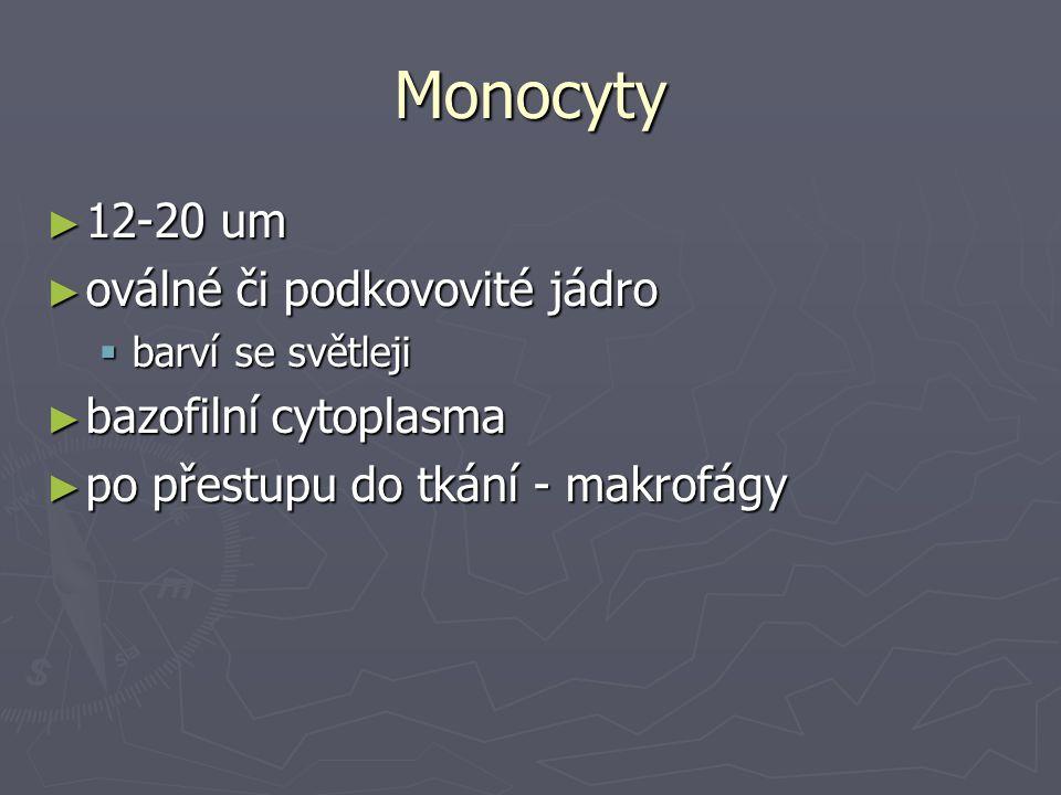Monocyty ► 12-20 um ► oválné či podkovovité jádro  barví se světleji ► bazofilní cytoplasma ► po přestupu do tkání - makrofágy