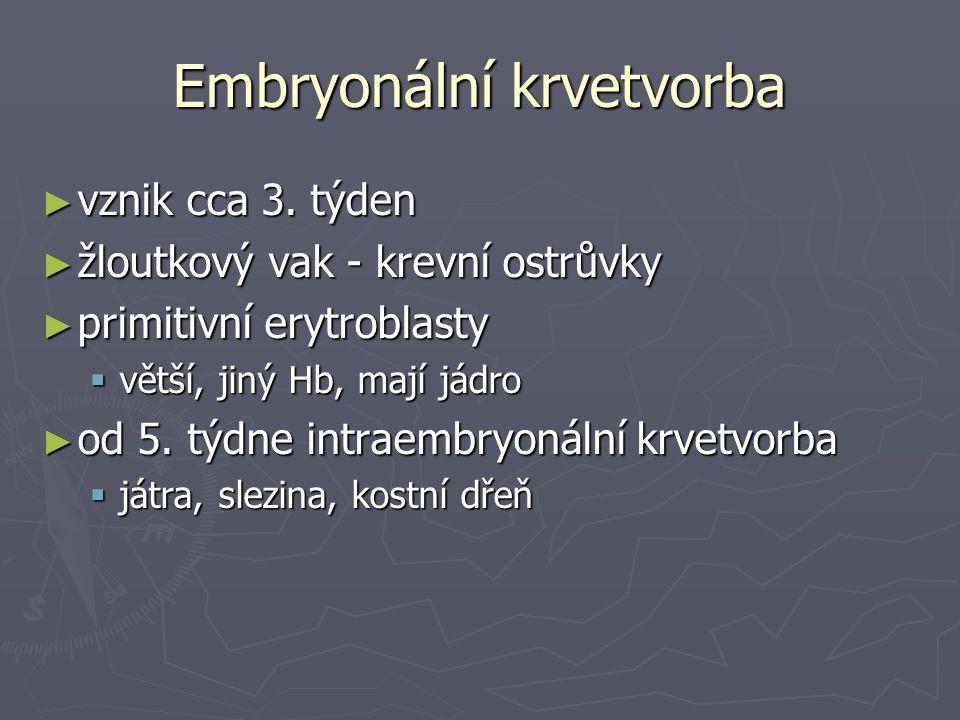 Embryonální krvetvorba ► vznik cca 3. týden ► žloutkový vak - krevní ostrůvky ► primitivní erytroblasty  větší, jiný Hb, mají jádro ► od 5. týdne int