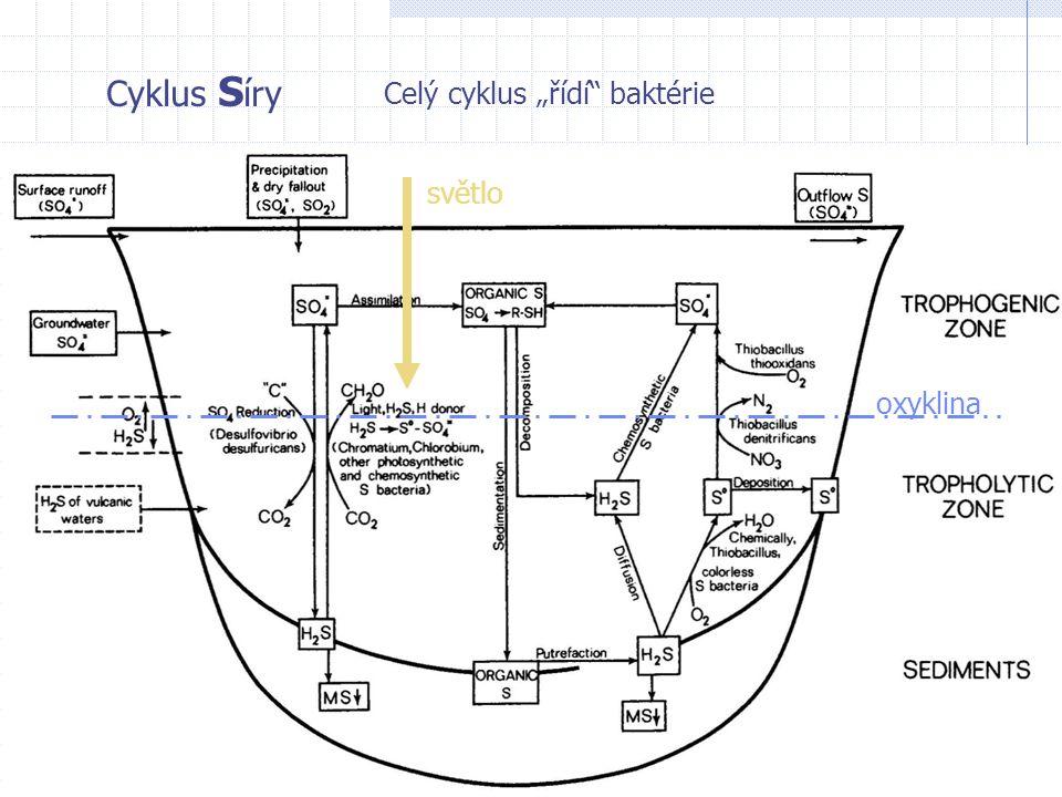 """Cyklus S íry Celý cyklus """"řídí"""" baktérie oxyklina světlo"""