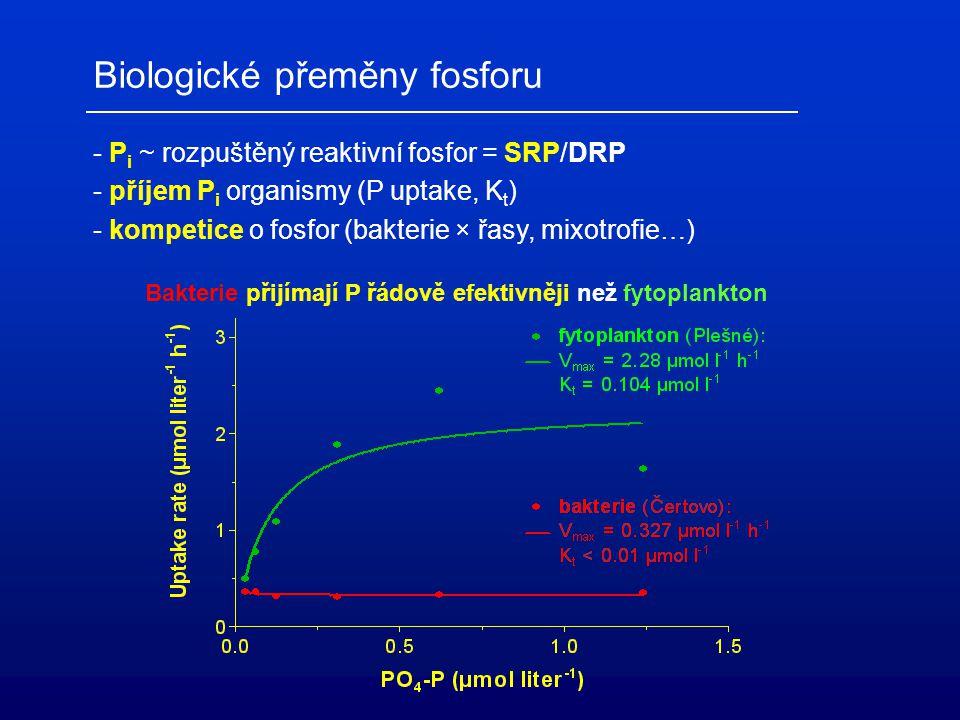 Biologické přeměny fosforu - P i ~ rozpuštěný reaktivní fosfor = SRP/DRP - příjem P i organismy (P uptake, K t ) - kompetice o fosfor (bakterie × řasy