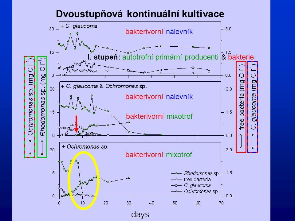 Dvoustupňová kontinuální kultivace bakterivorní mixotrof bakterivorní nálevník bakterivorní mixotrof I. stupeň: autotrofní primární producenti & bakte