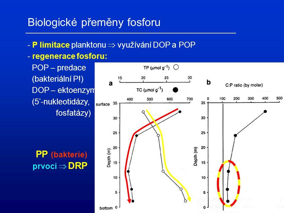 Biologické přeměny fosforu - P limitace planktonu  využívání DOP a POP - regenerace fosforu: POP – predace (bakteriální P!) DOP – ektoenzymy (5'-nukl