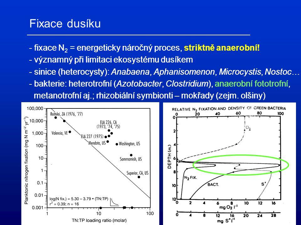 Příjem dusíku organismy (asimilace) - fototrofní asimilace NH 4 + a NO 3 - (nitrátreduktáza) - heterotrofní asimilace NH 4 +, asimilativní redukce NO 3 - - predace (grazing) Rozklad dusíkatých sloučenin - proteolýza - deaminace - amonifikace