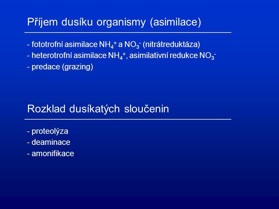 Příjem dusíku organismy (asimilace) - fototrofní asimilace NH 4 + a NO 3 - (nitrátreduktáza) - heterotrofní asimilace NH 4 +, asimilativní redukce NO