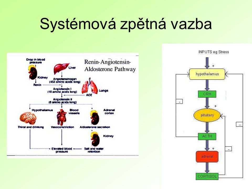 Systémová zpětná vazba