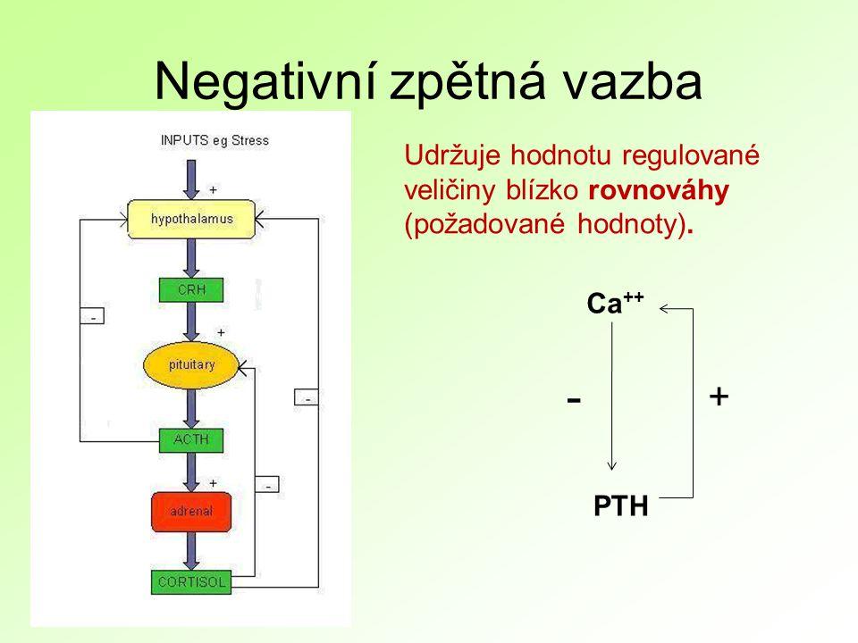 Negativní zpětná vazba PTH Ca ++ + - Udržuje hodnotu regulované veličiny blízko rovnováhy (požadované hodnoty).