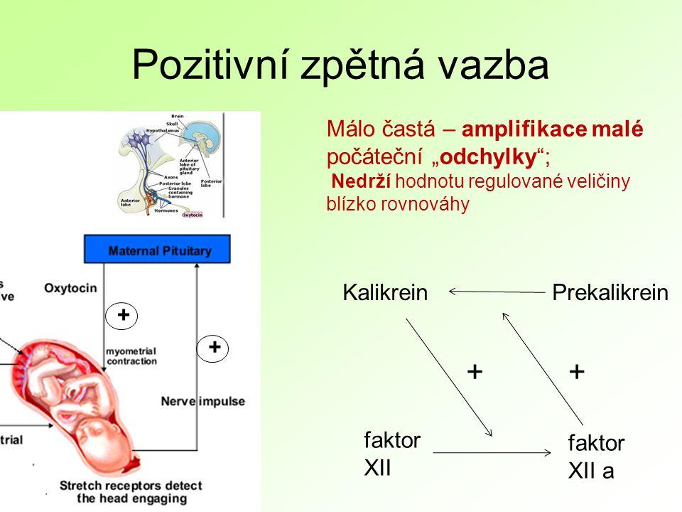 """Pozitivní zpětná vazba + + faktor XII faktor XII a KalikreinPrekalikrein ++ Málo častá – amplifikace malé počáteční """"odchylky ; Nedrží hodnotu regulované veličiny blízko rovnováhy"""