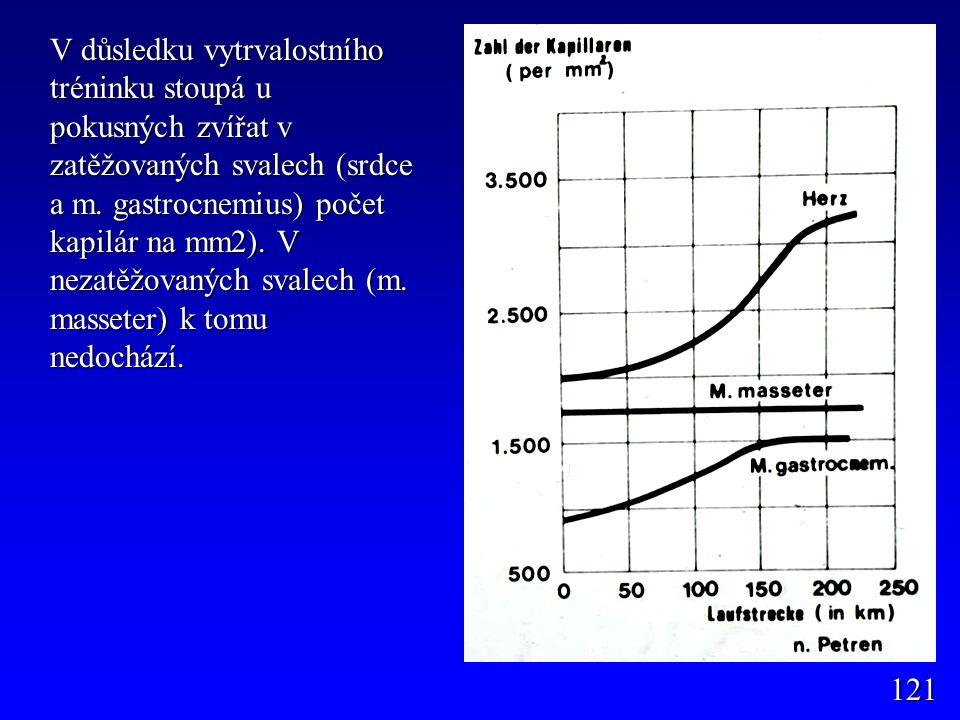 V důsledku vytrvalostního tréninku stoupá u pokusných zvířat v zatěžovaných svalech (srdce a m. gastrocnemius) počet kapilár na mm2). V nezatěžovaných
