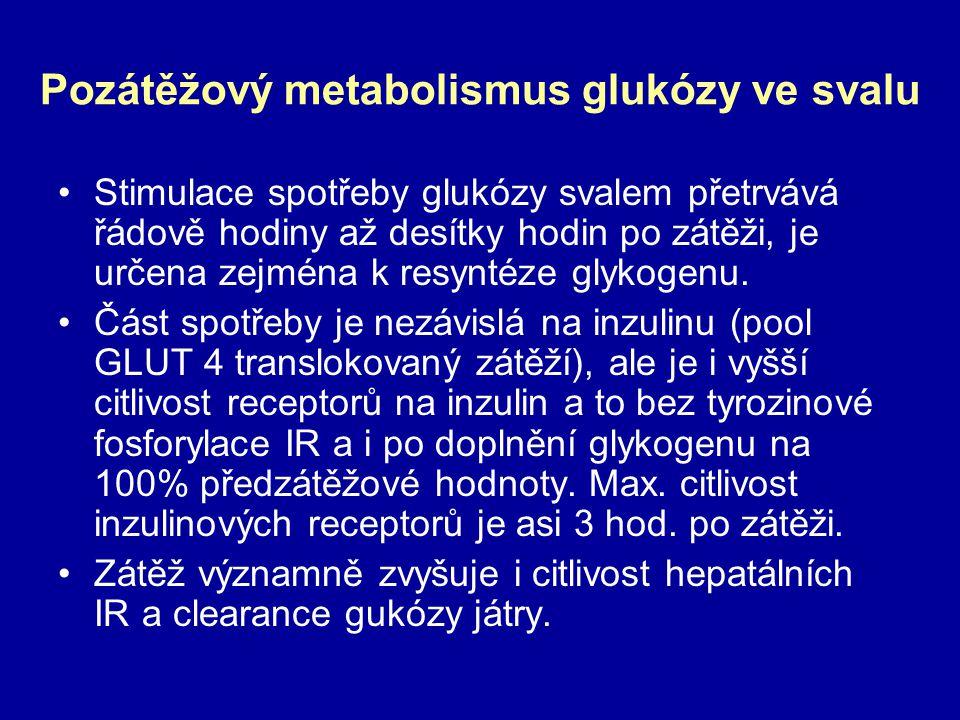Pozátěžový metabolismus glukózy ve svalu Stimulace spotřeby glukózy svalem přetrvává řádově hodiny až desítky hodin po zátěži, je určena zejména k res