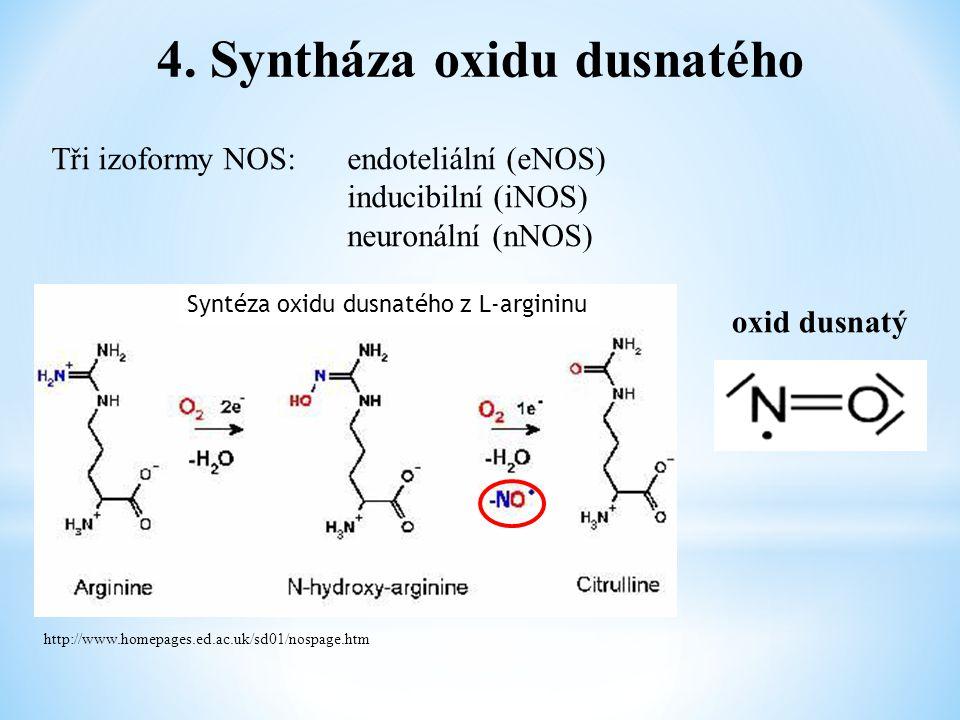 4. Syntháza oxidu dusnatého Tři izoformy NOS: endoteliální (eNOS) inducibilní (iNOS) neuronální (nNOS) oxid dusnatý http://www.homepages.ed.ac.uk/sd01