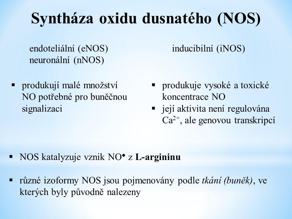 Syntháza oxidu dusnatého (NOS) endoteliální (eNOS) neuronální (nNOS) inducibilní (iNOS)  produkují malé množství NO potřebné pro buněčnou signalizaci