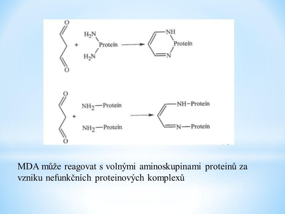 MDA může reagovat s volnými aminoskupinami proteinů za vzniku nefunkčních proteinových komplexů