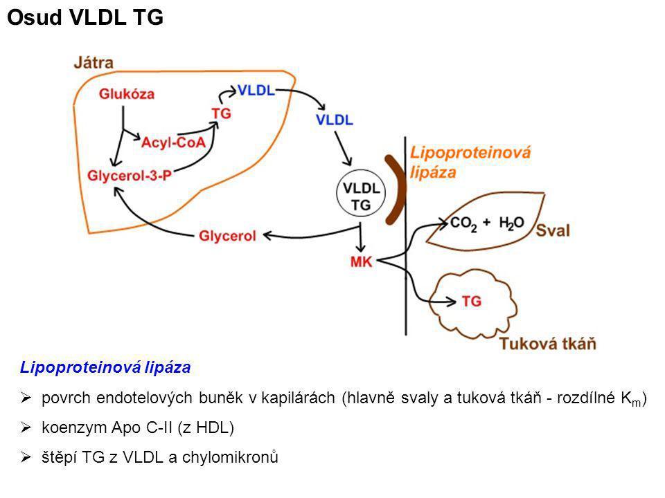 Osud VLDL TG Lipoproteinová lipáza  povrch endotelových buněk v kapilárách (hlavně svaly a tuková tkáň - rozdílné K m )  koenzym Apo C-II (z HDL) 