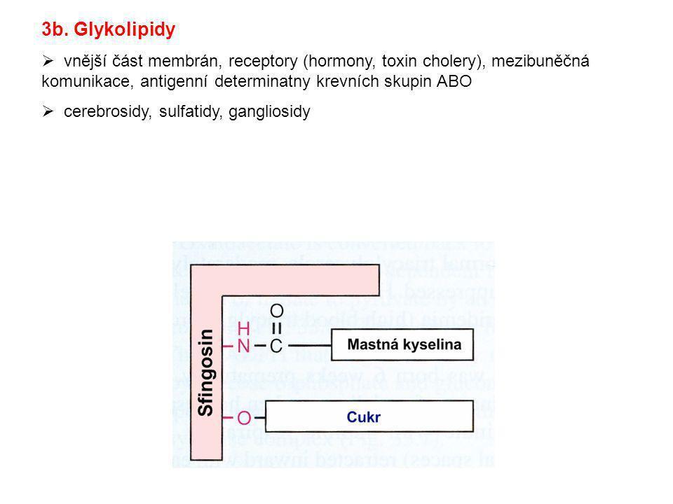 3b. Glykolipidy  vnější část membrán, receptory (hormony, toxin cholery), mezibuněčná komunikace, antigenní determinatny krevních skupin ABO  cerebr