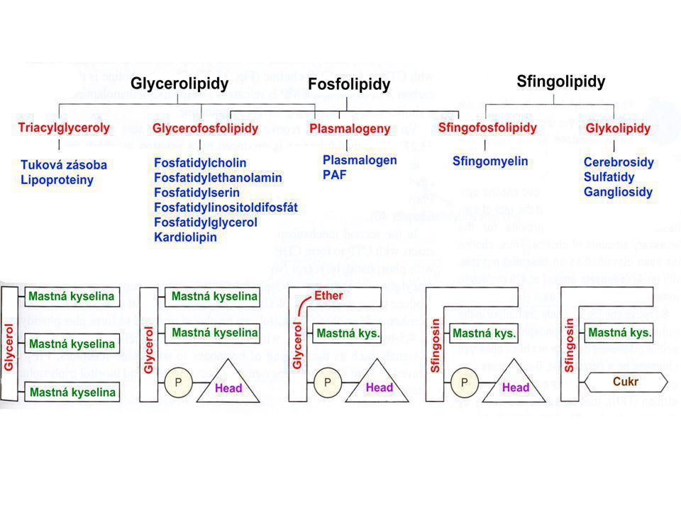 1.Triacylglyceroly  zásoba energie  tukové zásoby, lipoproteiny