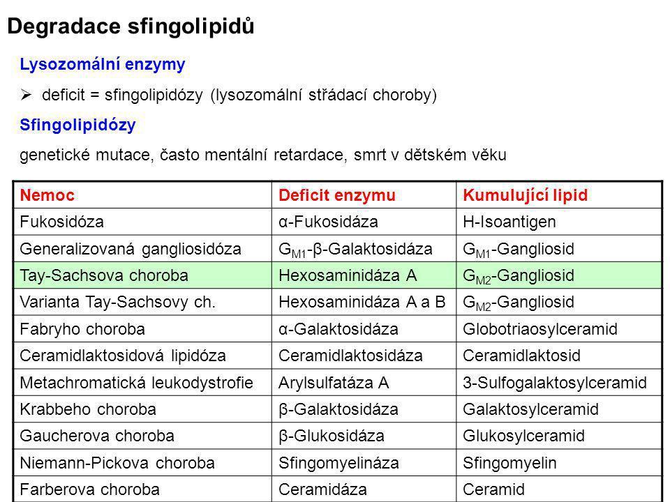 Degradace sfingolipidů Lysozomální enzymy  deficit = sfingolipidózy (lysozomální střádací choroby) Sfingolipidózy genetické mutace, často mentální re