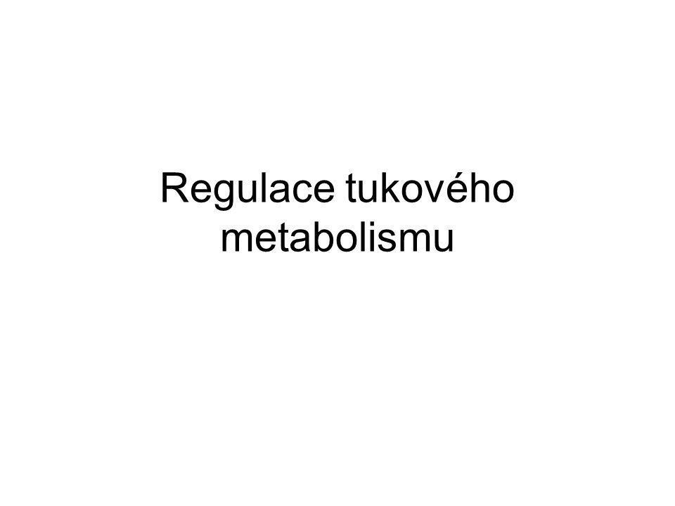 Regulace tukového metabolismu