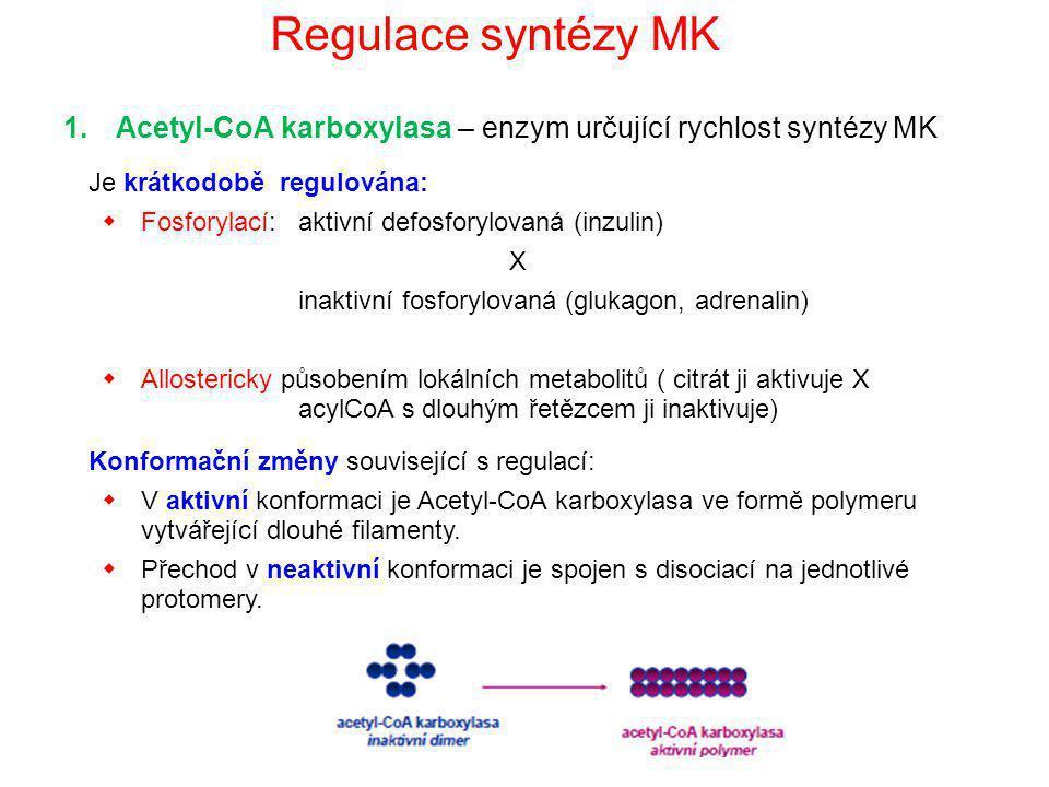 Regulace syntézy MK 1.Acetyl-CoA karboxylasa – enzym určující rychlost syntézy MK Je krátkodobě regulována:  Fosforylací: aktivní defosforylovaná (in
