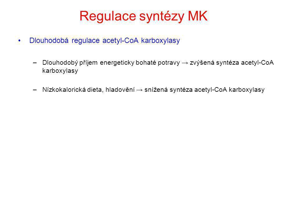 Regulace syntézy MK Dlouhodobá regulace acetyl-CoA karboxylasy –Dlouhodobý příjem energeticky bohaté potravy → zvýšená syntéza acetyl-CoA karboxylasy