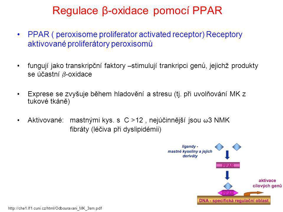 Regulace β-oxidace pomocí PPAR PPAR ( peroxisome proliferator activated receptor) Receptory aktivované proliferátory peroxisomů fungují jako transkrip