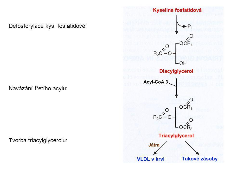 Defosforylace kys. fosfatidové: Navázání třetího acylu: Tvorba triacylglycerolu: