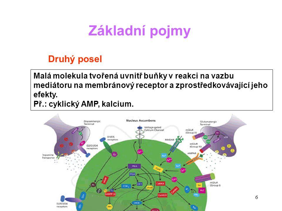 27 Flush syndrom (součást syndromu karcinoidu) Karcinoid ve sliznici ilea Typický flush obličeje po paroxysmálním uvolnění hormonů z karcinoidu Charakteristické syndromy