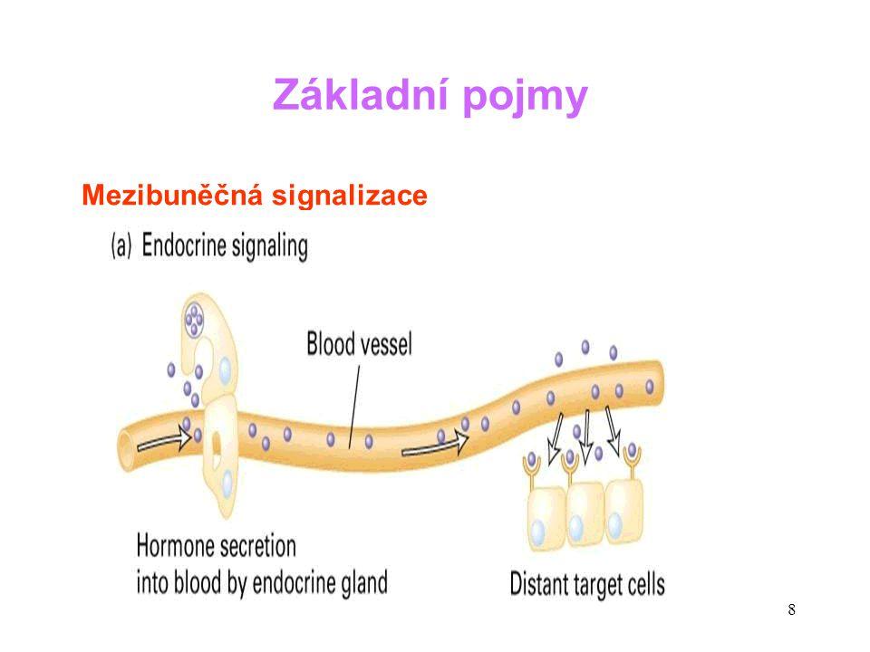 39 Hormony Další hormonální cykly Menstruační cyklus se odráží v cyklických změnách LH, FSH, estrogenů a progesteronu.