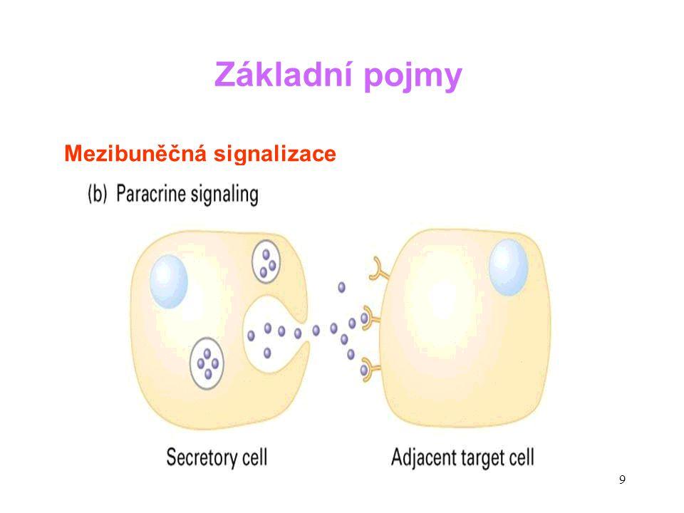 20 Paraneoplastické syndromy SyndromMediátor Cushingův syndromACTH, ACTH-like molekuly HyponatrémieADH HyperkalcémiePTHrP (PTH related peptide) HypoglykémieIGF-1 (insulin-like growth factor) Neuropatieřada působků OsteoporózaIL-6, TNF (např.