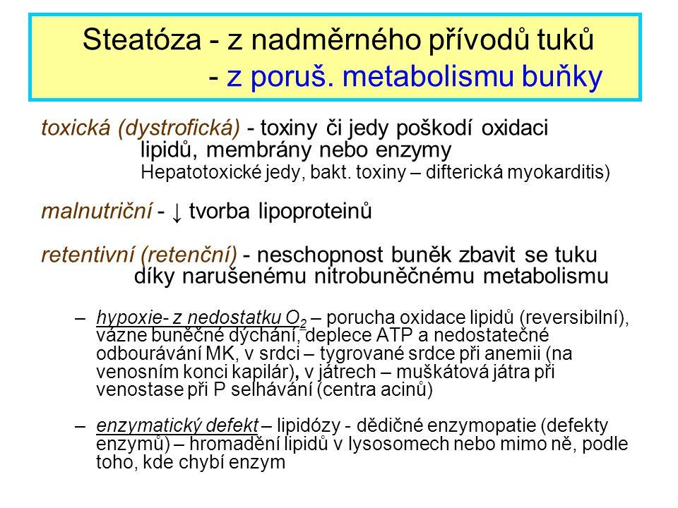 toxická (dystrofická) - toxiny či jedy poškodí oxidaci lipidů, membrány nebo enzymy Hepatotoxické jedy, bakt. toxiny – difterická myokarditis) malnutr