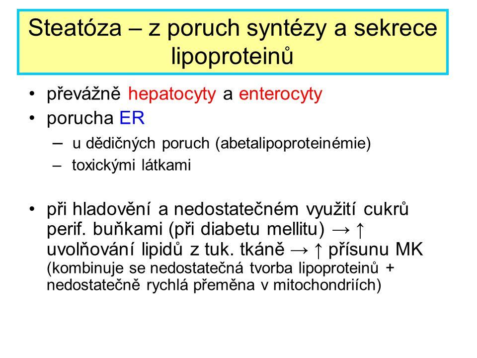 převážně hepatocyty a enterocyty porucha ER – u dědičných poruch (abetalipoproteinémie) – toxickými látkami při hladovění a nedostatečném využití cukr